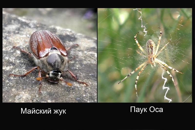Жук и паук